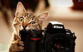 Concurs de fotografía
