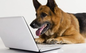 perro-con-ordenador