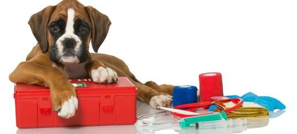 botiquin-perros