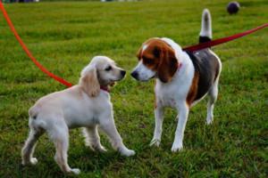 Presentación-de-dos-perros-1024x682
