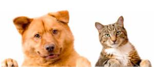 portada-mascotas