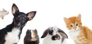 tenencia-responsable-mascotas-Informativo
